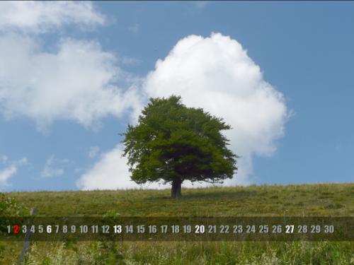http://www.k1ka.be/pics/arbre_calendrier.png