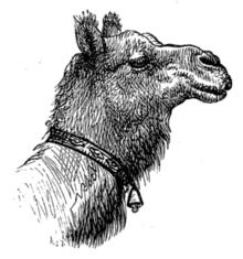 http://www.k1ka.be/pics/camel.png